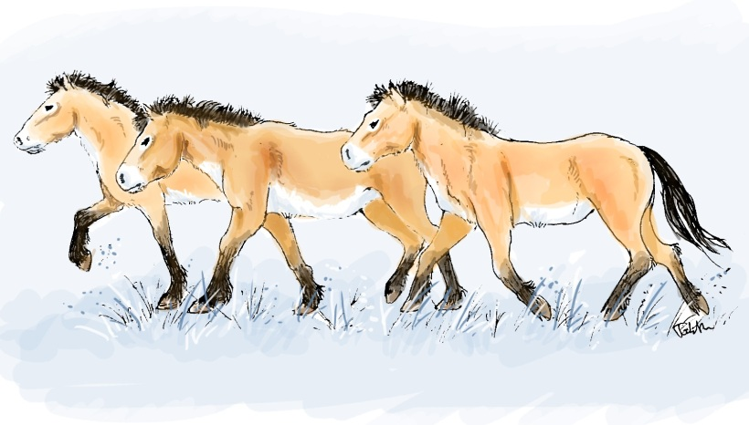 A team of horses (Equus caballus) slowly moving across the European steppes around 30,000 years ago. (Art by Tabitha Paterson)